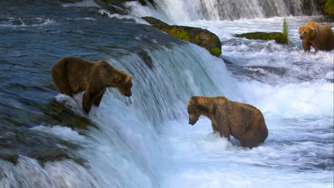 Brown bears Brooks Falls river fishing for salmon in remote wilderness Katmai National Park and Reserve Alaska USA