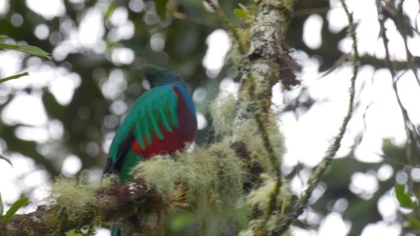 Header of quetzal