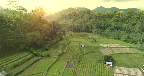 Aerial view of rice field. Flying over of rainforest - Bali, Indonesia