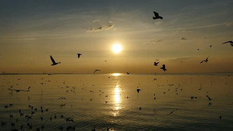 Seagulls Flying Above Sea At Sunset.