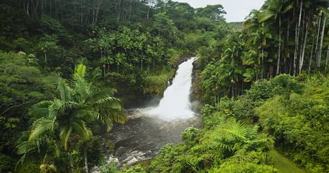 This stock video features an aerial drone shot from right featuring a waterfall. This waterfall in a Hawaiian jungle is surrounded by an assortment of palm trees ending into a pond.