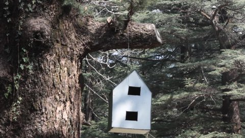 Birdhouse for birds and squirrels. White birdhouse in forest of Himalayan firs