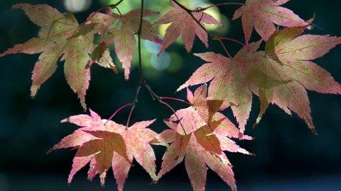 Autumn color seattle