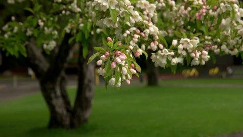 Spring flowers at UW