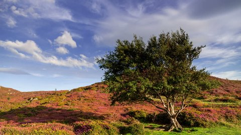 4k time lapse Sychnant Pass, North Wales. Tree, hill and clouds