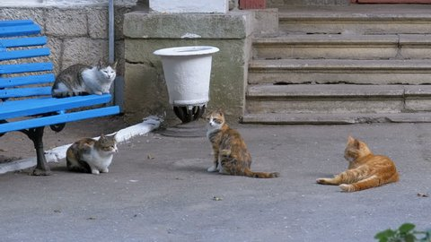 Many homeless cats sitting near a bench in the park. Different Gray, white, tri-colored and red cats next to each other on the city street.