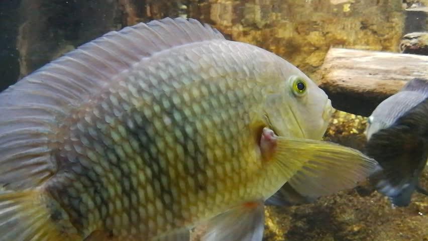 Fishs in a river fish aquarium