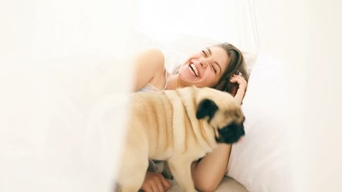 the pug dog wakes up his mistress in the morning in bed. Laughing attractive brunette woman. Video footage