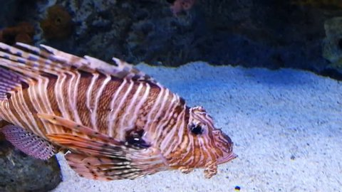 Marine life in the oceanarium of Lisbon, Portugal