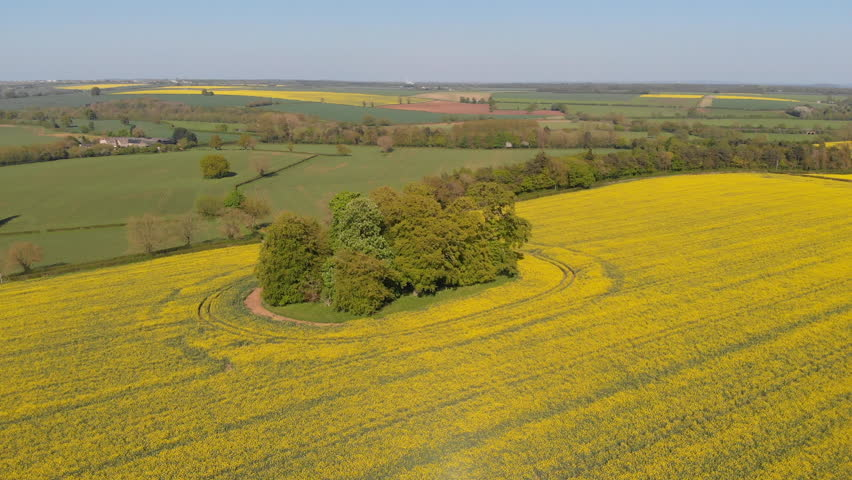 Flight over Oxfordshire fields. Yellow rape seed flowers in Spring