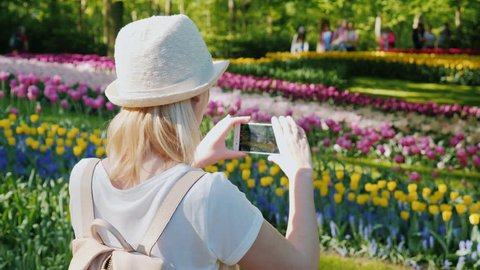 A tourist dressed in light clothes takes pictures of flowerbeds in the Keukenhau park in the Netherlands. Tourism in Europe concept