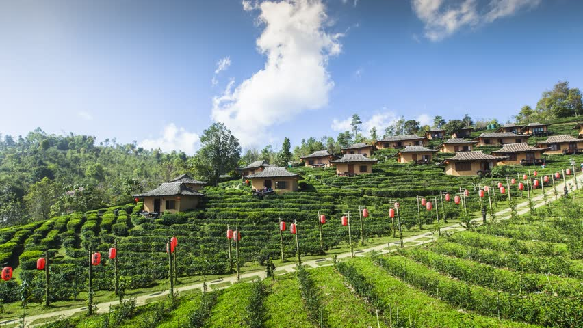 Time laps of green tea farm with chines hut village on hill under cloudy movement of clear sky located north of Thailand at Maehongsorn province
