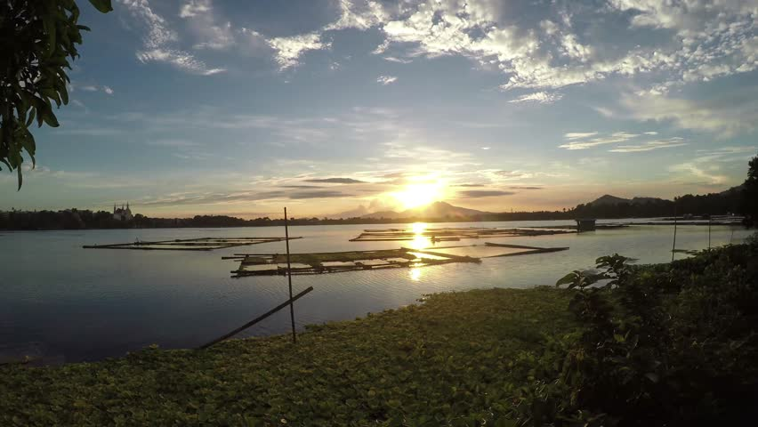 sunset over bamboo aquaculture structures and water lilies in the middle of the lake. silhouettes
