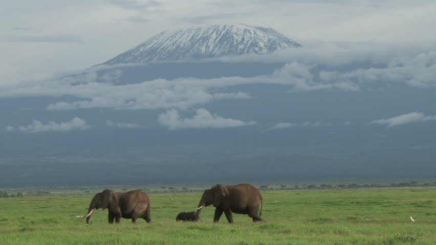 Two elephants with a baby walks across the camera with mount kilimanjaro in the background.