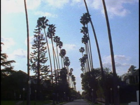 LOS ANGELES, 1999, Palm tree alley, tilt down to street
