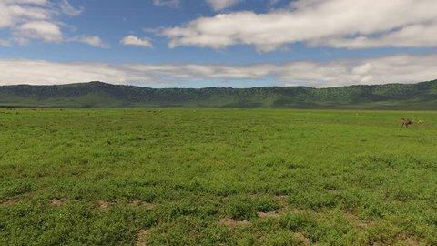 Landscape Serengeti, Ngorongoro Crater, Stable and smooth footage in 4 K. Serengeti, Tanzania, Africa