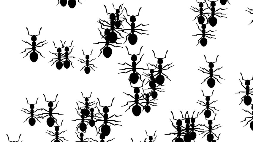 Invasion of Hordes of Ants  Stock Footage Video (100% Royalty-free)  1011772856 | Shutterstock