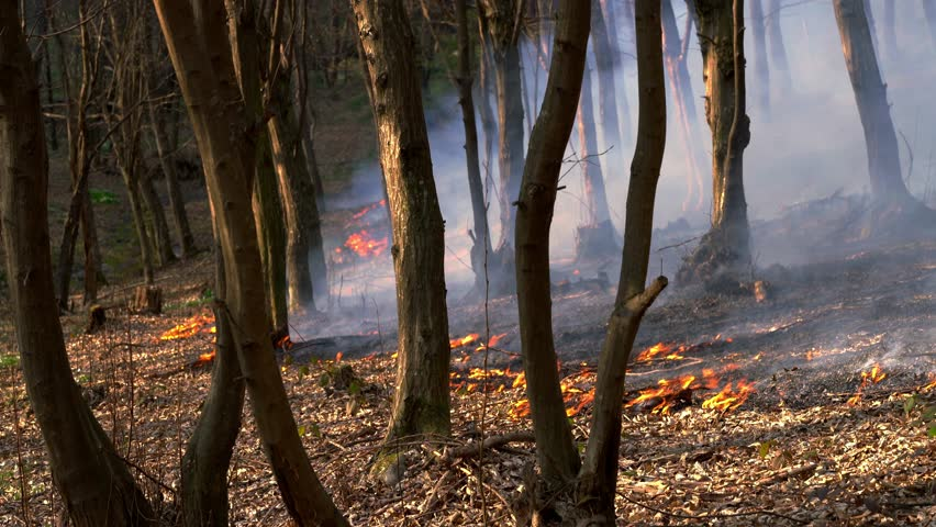 Fire in Forest