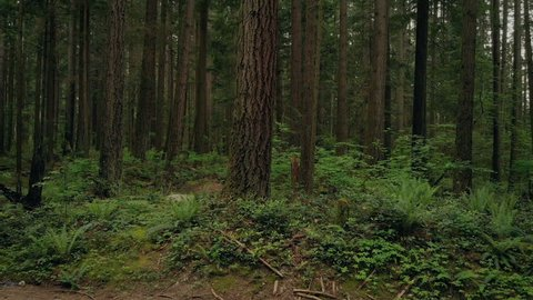 Moving Up Past Tall Forest Trees