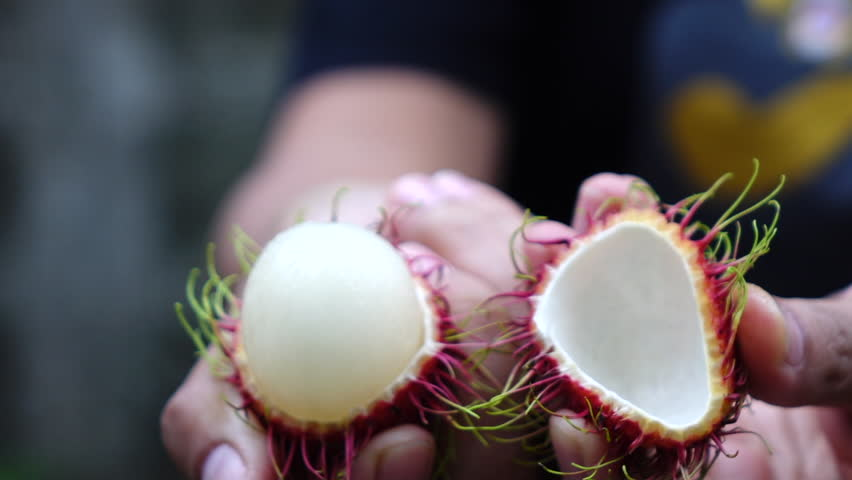 Hand peeling rambutan fruit slow motion