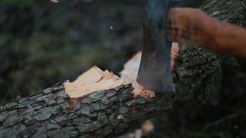 Hitting tree trunk with axe, slow motion from 120 fps