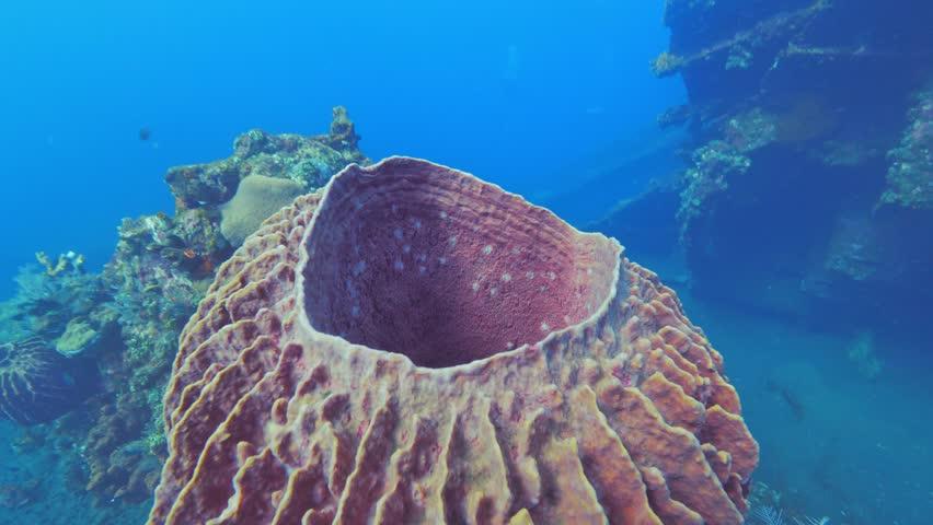 Header of Porifera