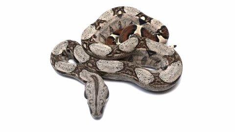 snakes moving over white