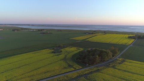 Aerial view of rapeseed fields and sea. Drone shot flying over farmer fields landscape on the countryside at sunset