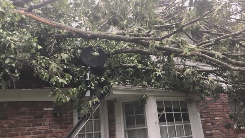 Tornado Damage from EF1 tornado. Microburst of high winds topple huge Oak tree on a house.