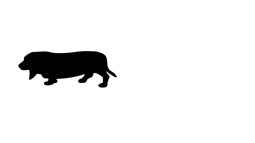 Silhouette of the black dog (basset hound), animation on the white background