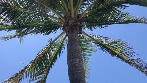 Palm Tree in Sarasota, Florida