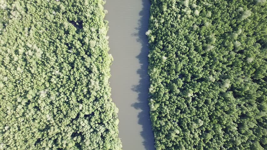 Mangrove forest aerial drone footage