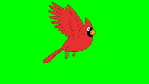 Animated red bird 1. Looped animation cardinal bird. Original file has an alpha channel. 29.97 fps