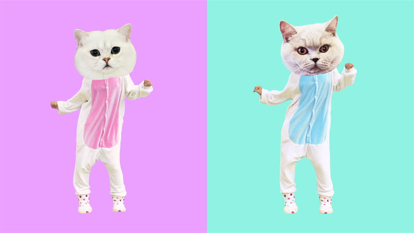 Minimal motion art. Dancing funny cats. Boy and Girl power | Shutterstock HD Video #1012633676