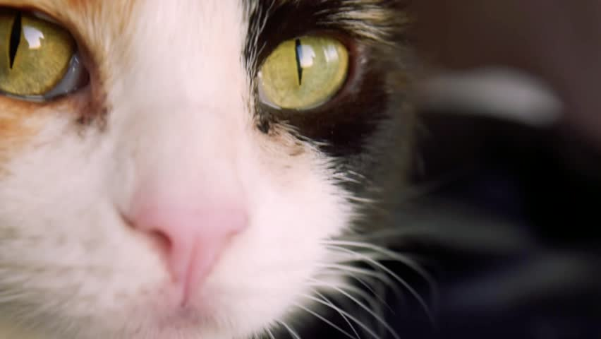 Close-up of a calico cat startled by something in distance