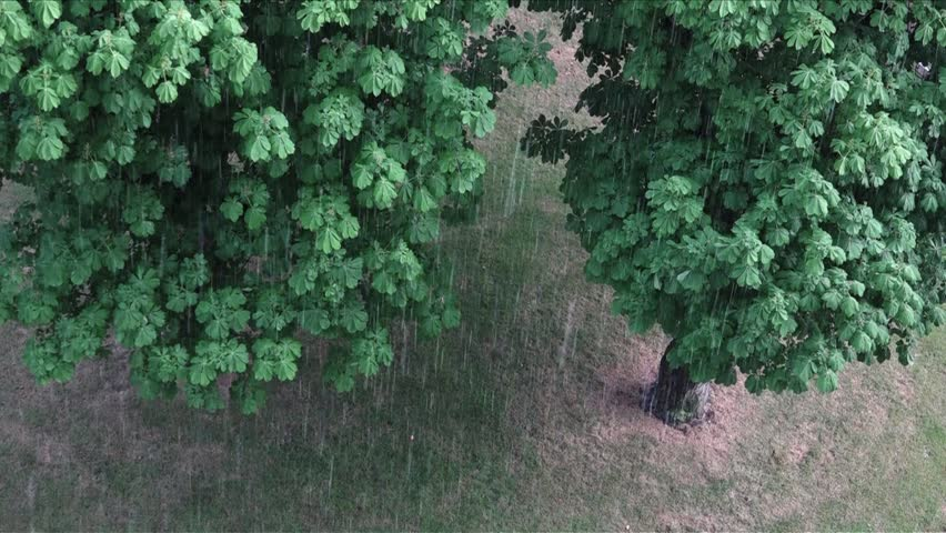 UK May 2018 - torrential rain falls down on tree during a storm. | Shutterstock HD Video #1012862456