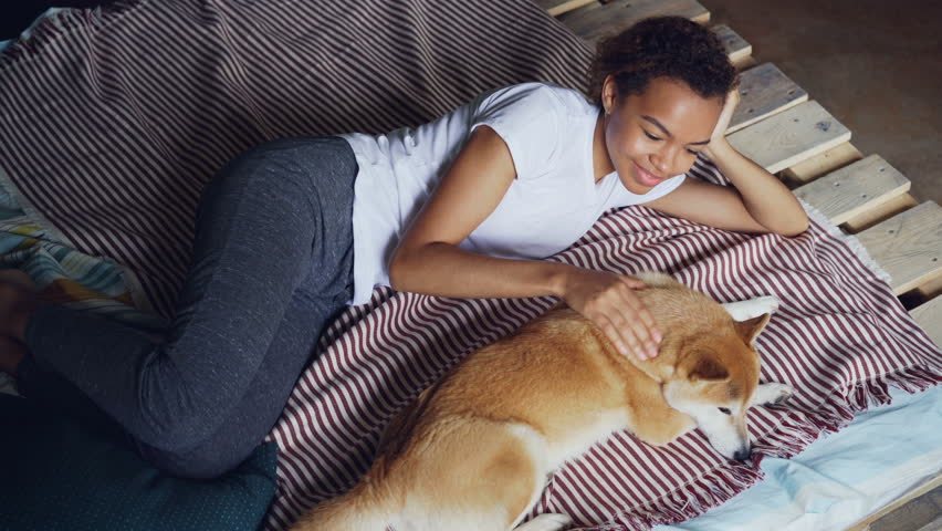 Kind African American girl is stroking lovely pet dog lying on bed at home together, enjoying rest and tranquility. Modern wooden bed and bright linen is visible. | Shutterstock HD Video #1012914716