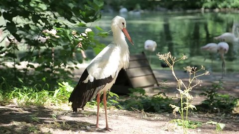 Harmony in nature. Lonely white stork in the morning park