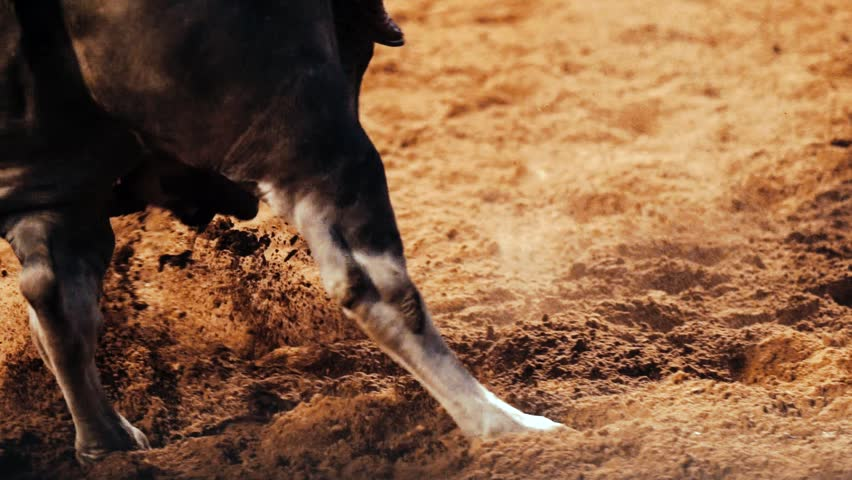 Slow Motion Bull Riding With Dirt Flying