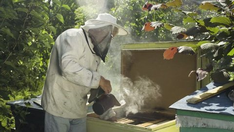 Beekeeper in protective veil and hat fumigate bee hive with hive smoker