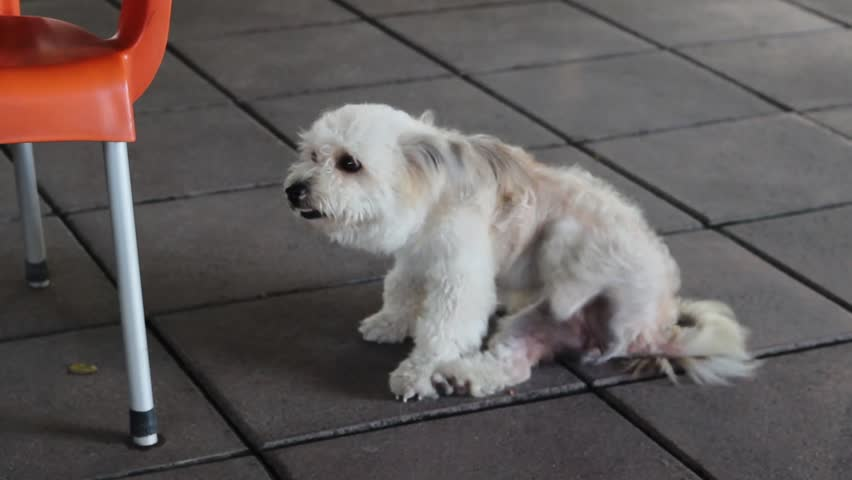 Close-up shot cideo of small white dog | Shutterstock HD Video #1013474426