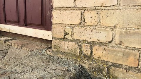 The ants attacked the cottage. Ants with wings crawl along the wall and the threshold of the house. The wall and door of the house is all in ants.