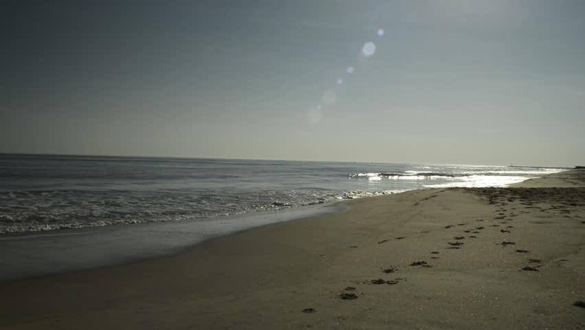 Large dog running along the beach near the waves on Virginia Beach