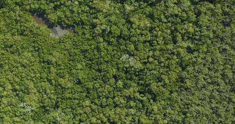 Very high-altitude overflight aerial of dense mangrove swamp, Florida everglades. Clip loops and is reversible. Elements of this image furnished by NASA