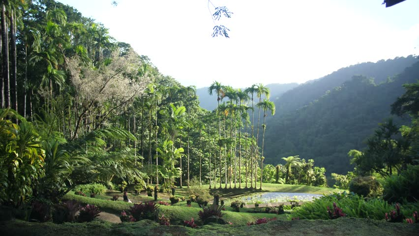 Beautiful view of Balata garden in Martinique, sunny day.