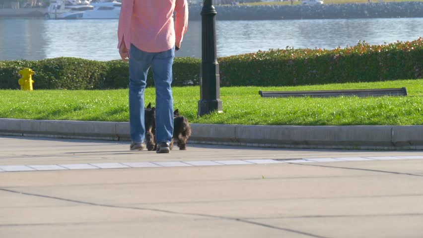 Man is walking with dogs. Dog walker with two dogs in a big city. Owner and two black dog walking in the city.