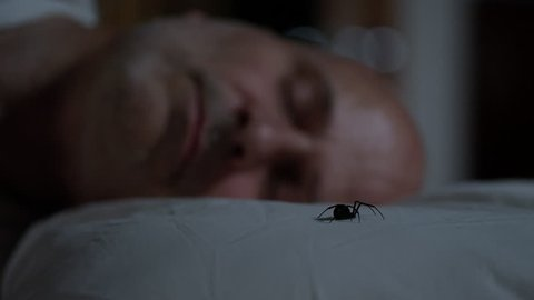 Black Widow Spider sitting on pillow next to sleeping man as he moves in his sleep.