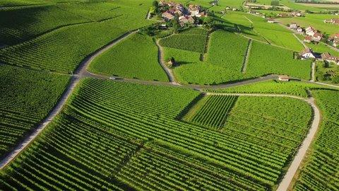 4K Aerial footage of Vineyard fields between Lausanne and Geneva in Switzerland -UHD