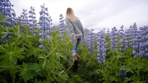 SLOW MOTION: Young woman running in purple flowers field in Iceland. Travel and adventure concept. Woman running arms wide open in nature