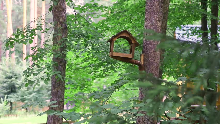 The woodpecker saw the food in the trough and came to eat. The woodpecker decided to taste the food from the feeder. Woodpecker eats food from the birdhouse.